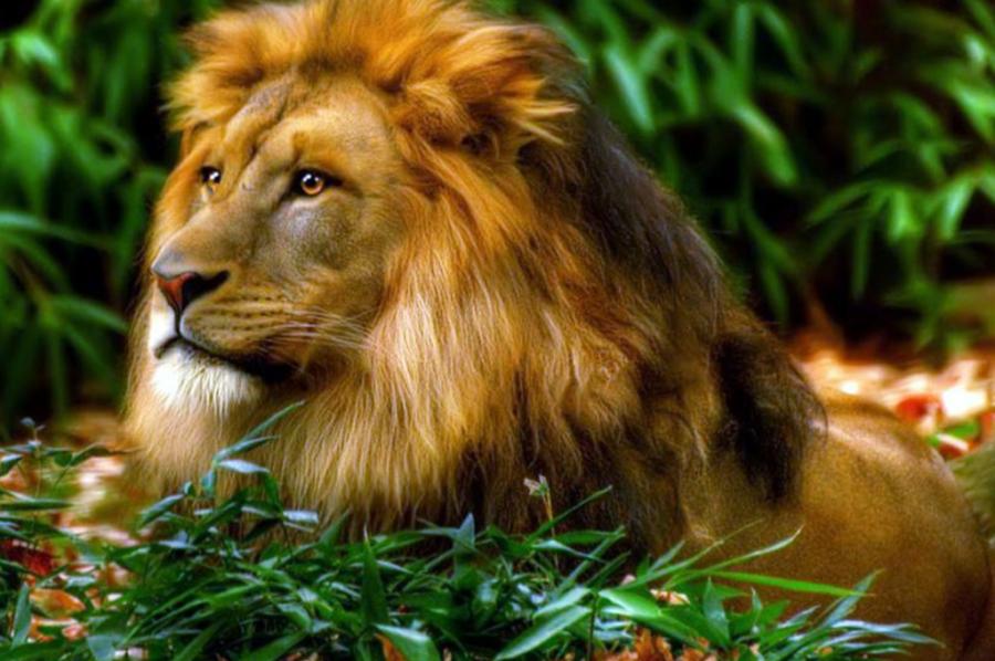 aslan-09